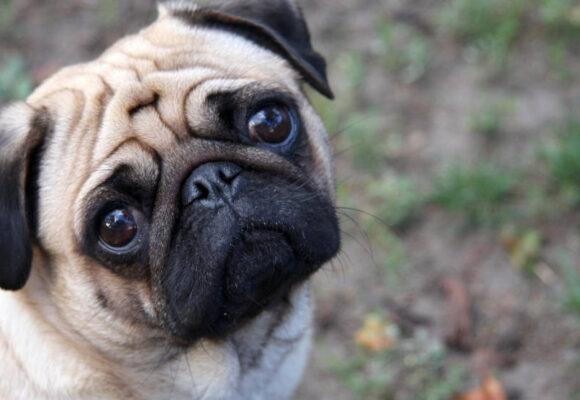 Dezbatere publică despre câinii din Oneşti